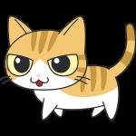かわいい茶白猫の無料イラスト