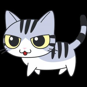 かわいいサバ白猫
