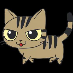 かわいいキジトラ猫