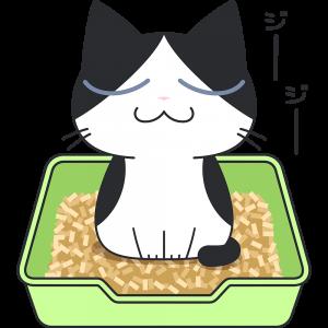 猫砂でおしっこをする白黒猫