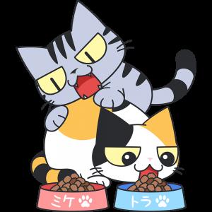 エサを横取りする猫