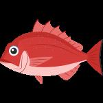 マダイ(魚)の無料イラスト