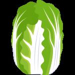 白菜の無料イラスト