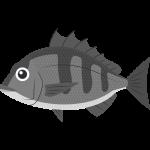 クロダイ・チヌ(魚)の無料イラスト
