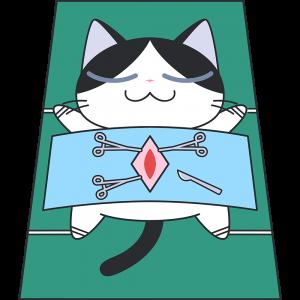 避妊手術をする猫