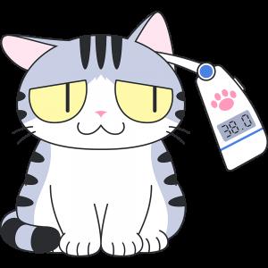 耳で体温を測る猫
