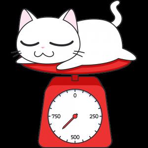子猫の体重測定