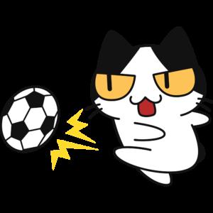 サッカー:強烈なシュートをする猫