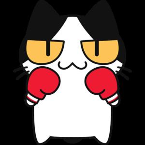 ボクシング:ファイティングポーズをとる猫