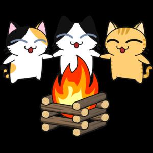 キャンプファイヤーする猫