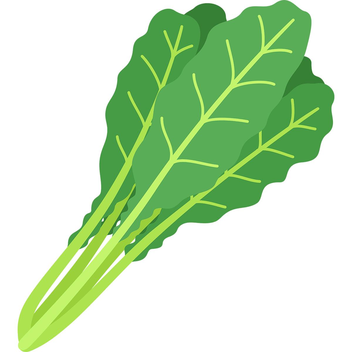 野沢菜の無料イラスト