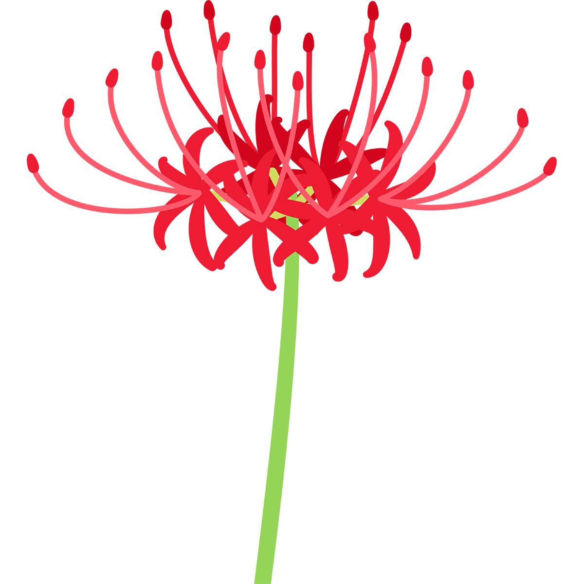 彼岸花(ヒガンバナ)の無料イラスト