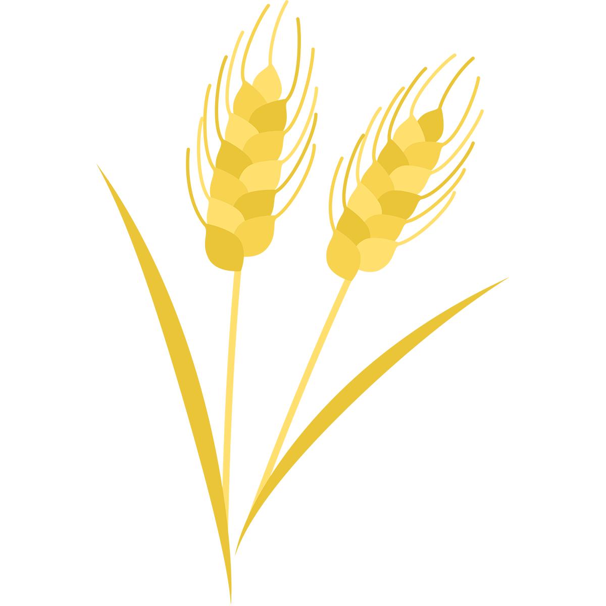 小麦の無料イラスト