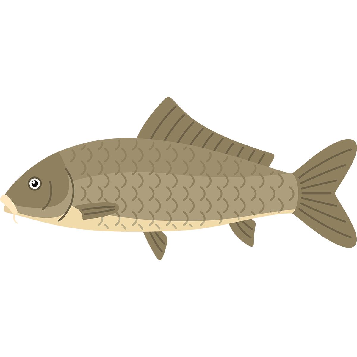 コイ(鯉)の無料イラスト